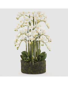 Luxury Artificial Orchid H100