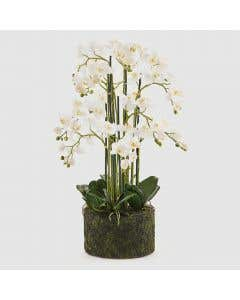 Luxury Artificial Orchid H90