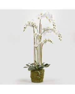 Luxury Artificial Orchid H132