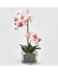 Artificial Orchid White/Pink